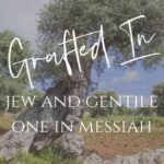 Grafted In - Jew and Gentile One in Messiah - An image of an olive tree