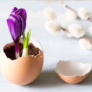 An image of a broken eggshell with flowers growing out of it - God Uses the Weak - 4 Reasons God Uses Broken People