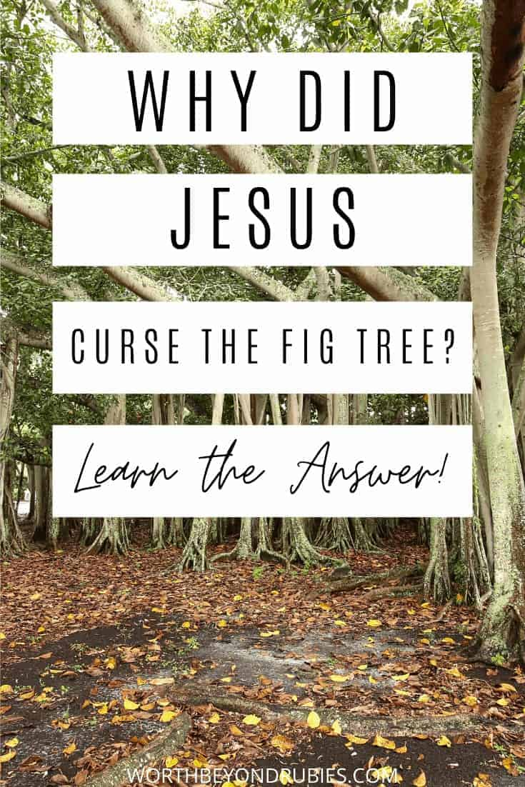 An image of fig trees with text that reads Why Did Jesus Curse the Fig Tree - Learn the Answer!