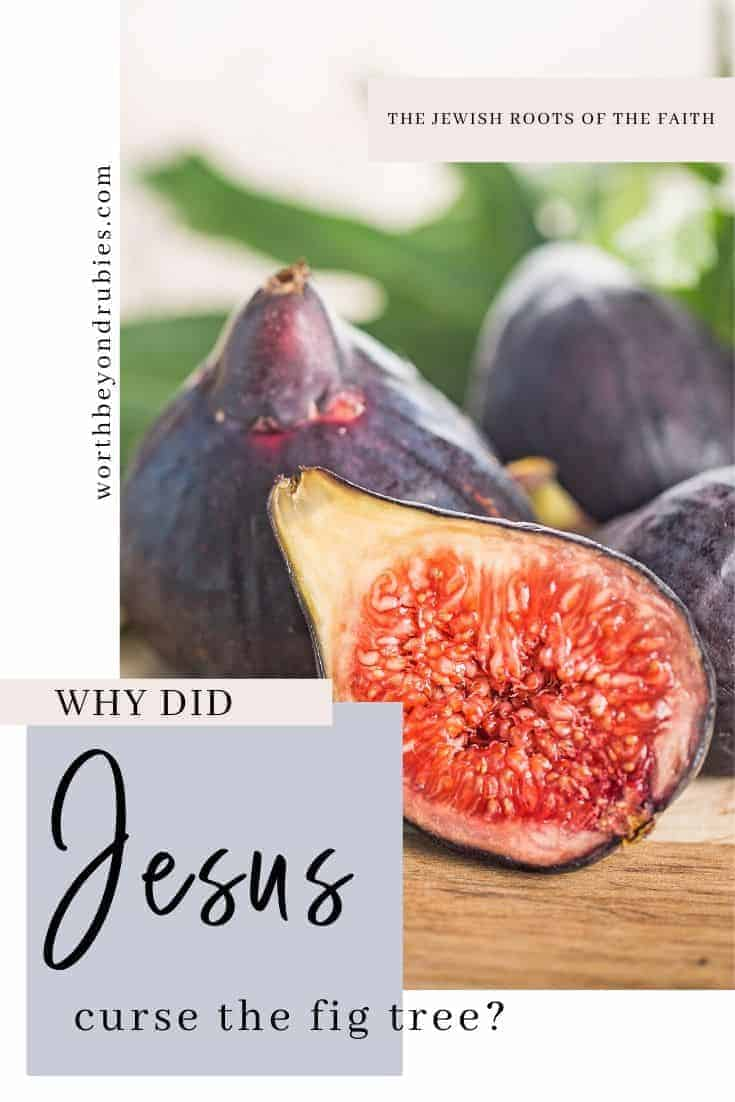 Why Did Jesus Curse the Fig Tree? The Fascinating Answer! - Images of figs