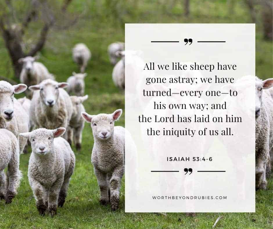 Old Testament vs New Testament - An image of sheep in a field