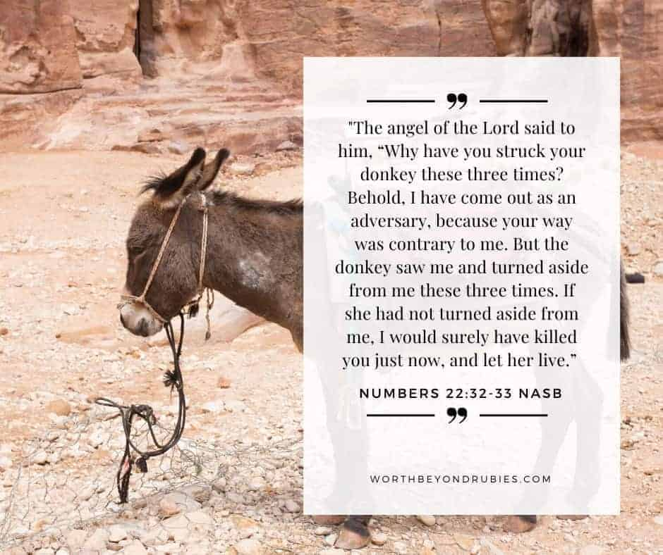 An image of a donkey and Numbers 22:32-33 quoted