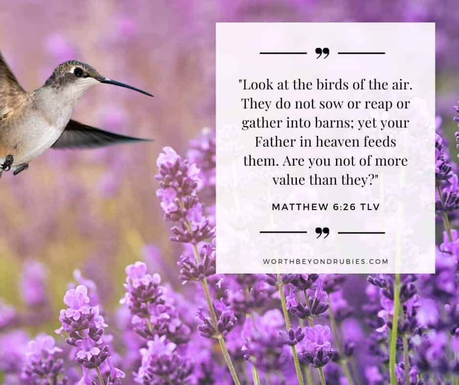 Hummingbird feeding from wild lavender with Matthew 6:26 quoted from the Tree of Life version - The Promises of God article